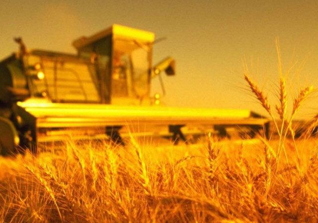 Кубань планирует нарастить экспорт продовольствия в Китай