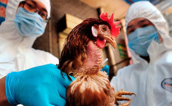 Ростовские власти возместили двум компаниям 230 млн рублей ущерба от гриппа птиц